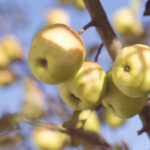 Beneficio de las manzanas
