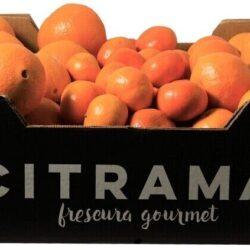 Cesta vitamina C con naranjas y mandarinas
